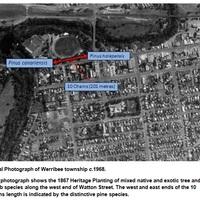 Historical trees.jpg